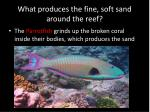 what produces the fine soft sand around the reef