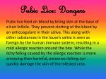 pubic lice dangers