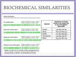 biochemical similarities3
