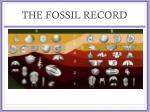 the fossil record2