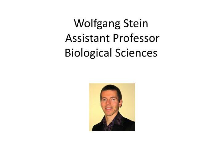 Wolfgang Stein