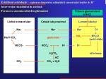 echilibrul acidobazic ap rarea mpotriva schimb rii concetra iei ionilor de h2