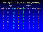 one tag snp may serve as proxy for many1