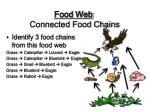 food web connected food chains