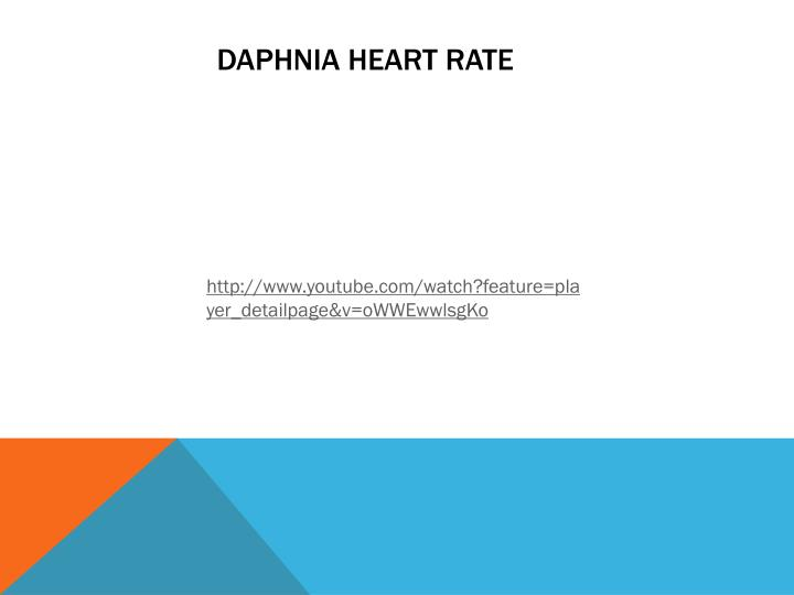 Daphnia heart rate