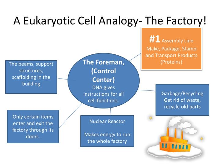 eukaryotic cell analogy