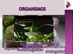 organismos