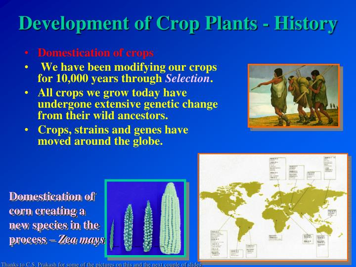development of crop plants history n.