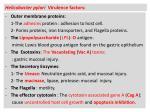 helicobacter pylori virulence factors