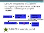 tubular phosphate transport