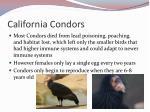 california condors1