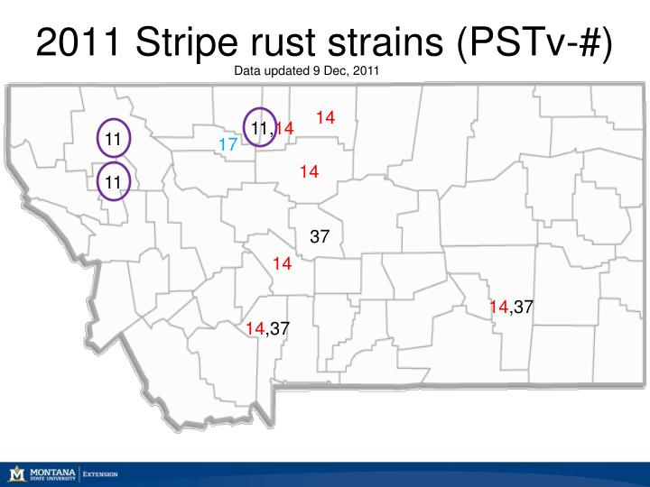 2011 Stripe rust strains (