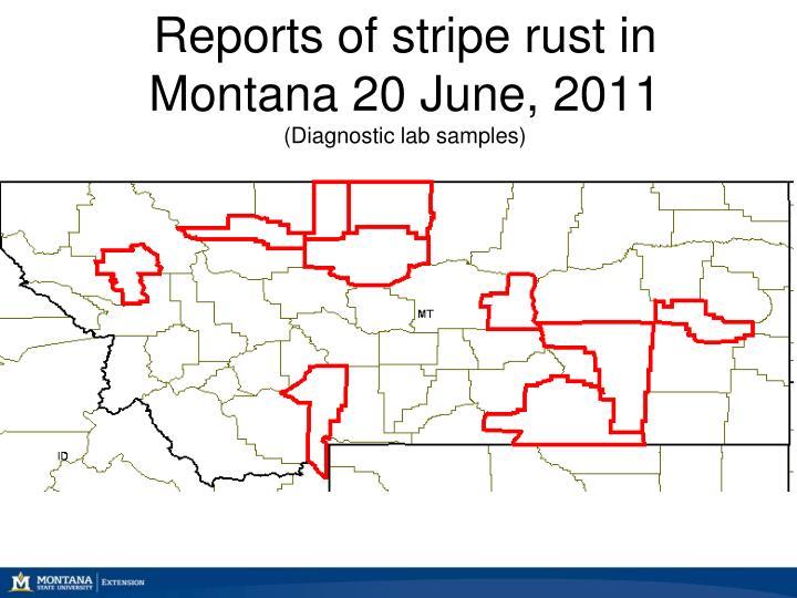 Reports of stripe rust in Montana 20 June, 2011