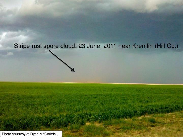 Stripe rust spore cloud: 23 June, 2011 near Kremlin (Hill Co.)
