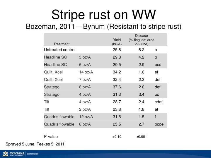 Stripe rust on WW