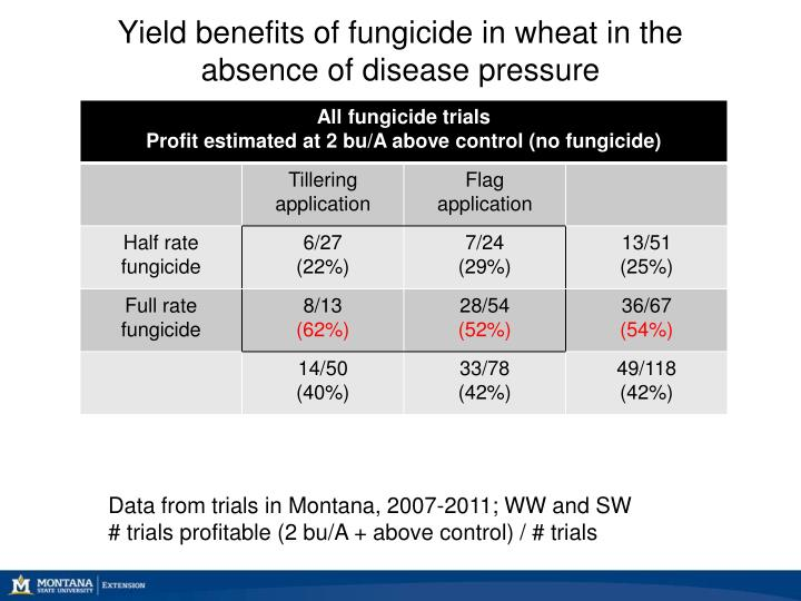 Yield benefits of fungicide in wheat in the absence of disease pressure