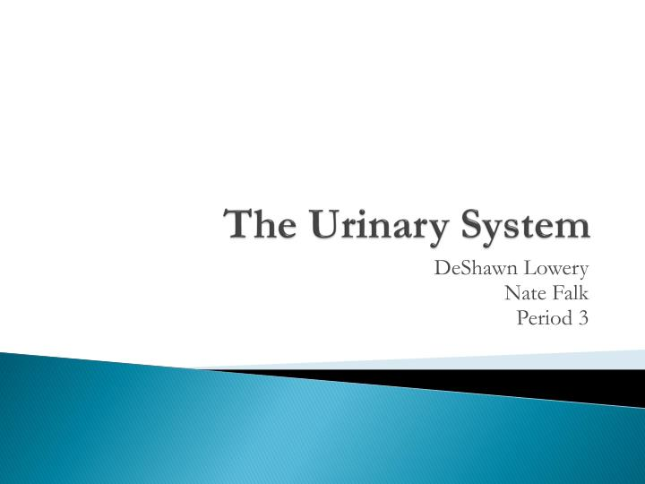 the urinary system n.