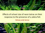 effects of school size of neon tetras on their response to the presence of a zebra fish