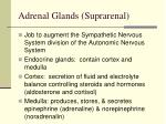 adrenal glands suprarenal