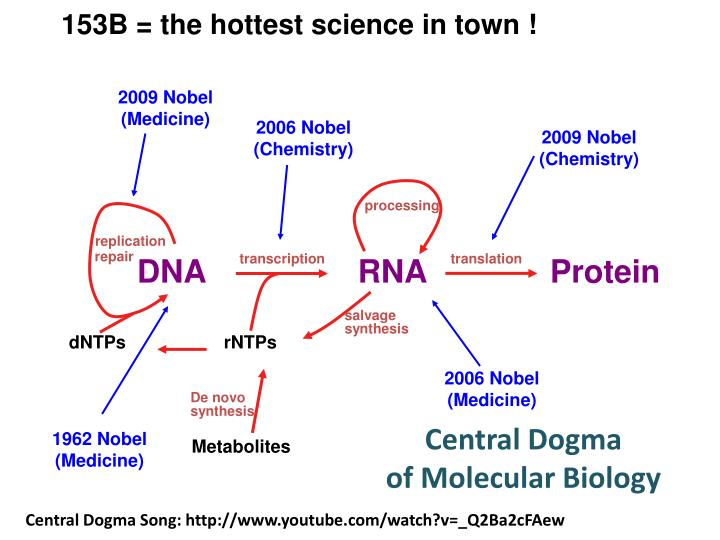 central dogma of molecular biology ppt pdf
