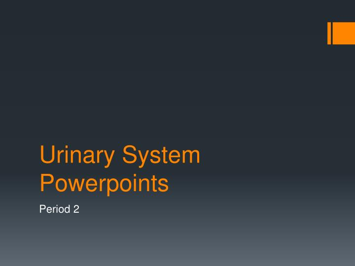 urinary system powerpoints n.