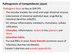 pathogenesis of campylobacter jejuni