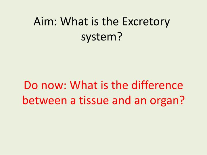aim what is the excretory system n.