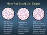 more red blood cell shapes