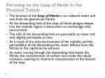 focusing on the loop of henle in the proximal tubule