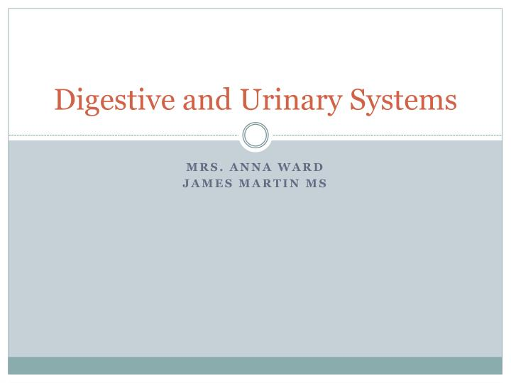 digestive and urinary systems n.