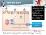 inflammation1