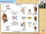 pathogenesis of type 1 crs
