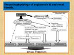 the pathophysiology of angiotensin ii and renal fibrosis