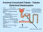 proximal convoluted tubule tubular selective reabsorption