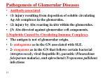 pathogenesis of glomerular diseases