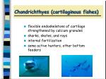 chondrichthyes cartilaginous fishes