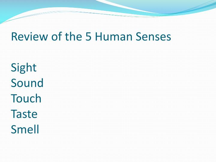 review of the 5 human senses sight sound touch taste smell n.