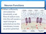 neuron functions2
