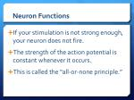 neuron functions3