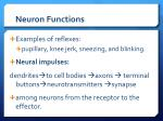 neuron functions9