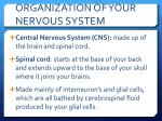 organization of your nervous system1