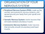 organization of your nervous system2