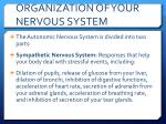 organization of your nervous system3