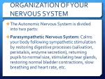 organization of your nervous system4