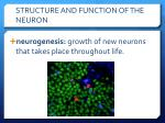 structure and function of the neuron10