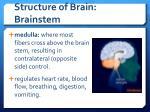 structure of brain brainstem