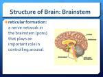 structure of brain brainstem2