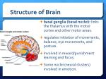 structure of brain1