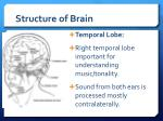 structure of brain12