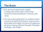 the brain1